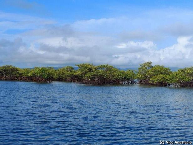 Mangroves during high tide in the island.