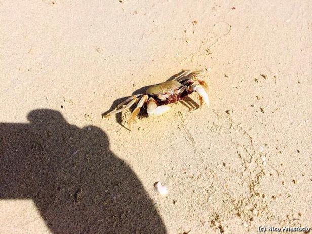 Small crab in the sand.