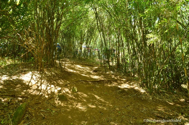 the bamboo forest near the basecamp
