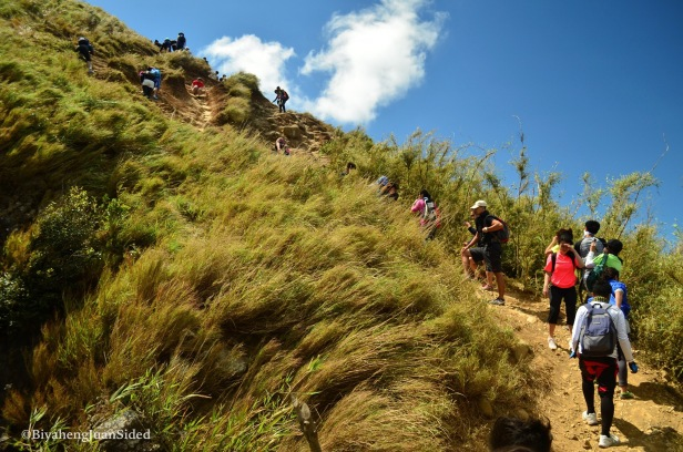 started with grassy area, then, dusts and rocks: on our way to the summit