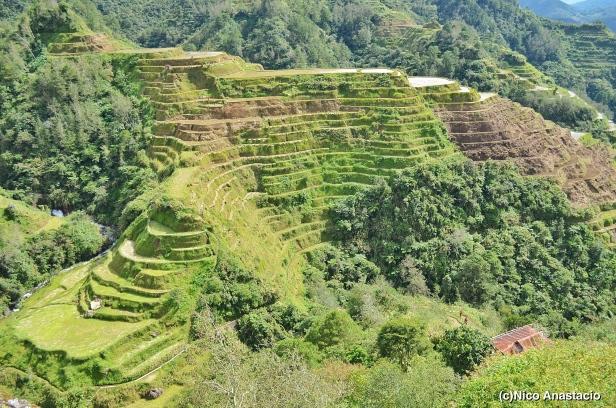 the Banaue Rice Terraces