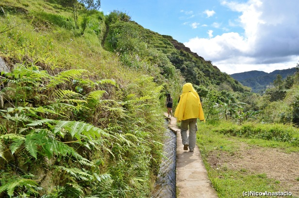 walking along the pathways of the rice terraces