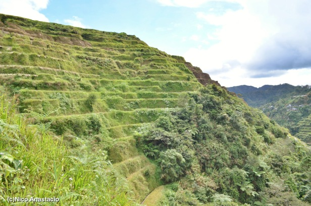 a lateral perspective of the terraces