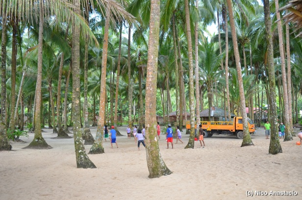 Coconut trees in the Tagbirayan Beach