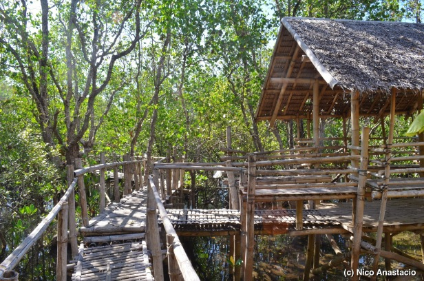 a rest station in the mangrove trail