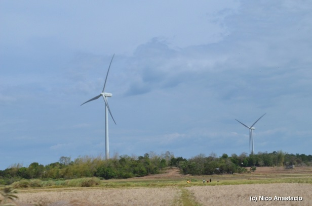 rice field and the windmills