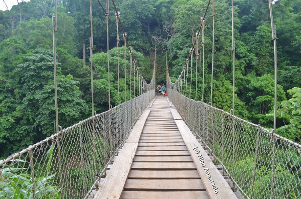 the hanging bridge at the start of the trail