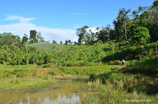 crops field that you need to pass through to go to Aliw Falls via Dafi Resort