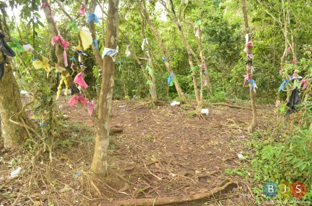 plastic bags hanged on trees along the trail of Bud Bongao